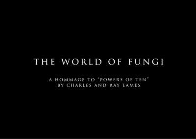 Geschützt: The World of Fungi